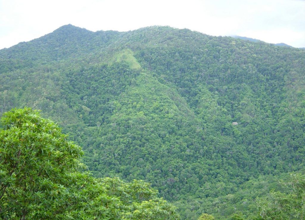 rainforrest_between_kuranda_and_cairns_north_east_queensland